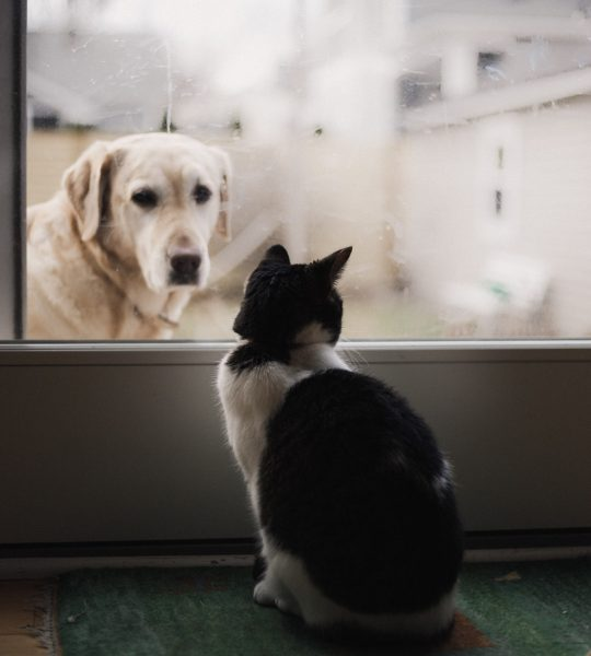 A dog and cat looking at each other through a glass door trying to connect with one another to show it is important to connect with right audience to enhance brand intimacy on  social media